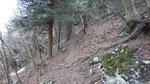 Nel bosco sotto il Monte San Martino