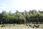 Weidendom im August