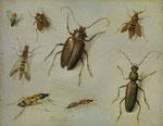 JAN VAN KESSEL D. Ä., Insekten-Studie, CHF 72'000, June 2016