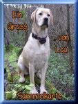 http://labradorsweetfamilydog.npage.de/leas_sammelkarten_41243857.html