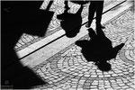 Schattengang                                                (Annahme)