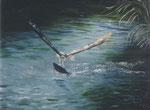 Fischadler - Öl auf Leinwand 30 x 40 cm - verkäuflich