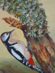 Buntspecht - Öl auf Leinwand 24 x 18 cm -verkäuflich
