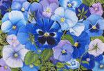 Blaue Stiefmütterchen - Schichttechnik mit Blei- und Buntstift 20x30 cm unverkäuflich, als Druck erhältlich
