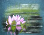 Seerose - Pastellkreide 50x60 cm