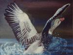 Wildegans - Öl auf Leinwand 24 x 30 cm - verkäuflich
