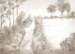 Landschaft2 - Bleistift 30 x 40 cm unverkäuflich