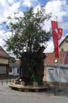 """""""Lutherbaum-Denkmal"""" mit der so genannten """"Baum-im-Baum-Lösung"""". Wohl im 16. Jh. gepflanzt, erhob sich die Baumkrone bis zu mehr als 30 Metern. Der Legende nach er auf 1521 datiert, als Martin Luther in Worms seine Lehre verteidigte (Bild Karl Schröding)"""