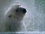 * shakin Sunshine * Zoo Wuppertal