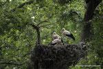 Überall : Herrliches Storchengebiet