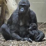 Muna und Sohn Tambo  Zoo Krefeld