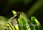 Fliege I