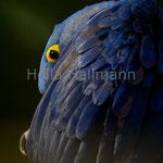 * neckisch * Hyazinthara Zoo Krefeld