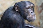 Limbo Laras Sohn Zoo Krefeld