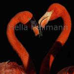* red heart * Flamingos Zoo Krefeld