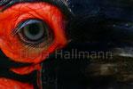 * eye make up *  Hormrabe Zoo Krefeld