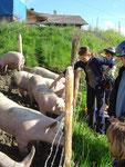 Was? auch Schweine brauchen Sonnencrème?