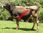 764 Xigo Total Calbuco