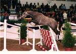 Ivanhoe Trak geb.1995  Napoleon Quatre  Neumünster 97