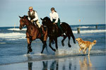 Lennard und Shamrock Strandspaziergang Norderney