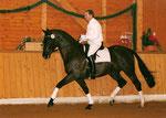 Hennessy Trak geb. 1990   Arthus  Nachkörung Alsfeld