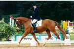 Il Mondo Reitpferdeprüfung Trakehner Bundesturnier