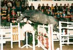 Guzzi Trak geb. 1994 Herzzauber  Körung Neumünster 96 Prämienhengst