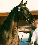 Hennessy Trak geb. 1990   Arthus- Erzsand   Körung Neumünster 93