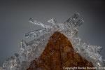Eiskristall an Eichenblatt in 2,5-facher Vergrößerung, 43 Einzelbilder
