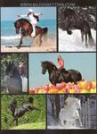 Baroque Horse Magazine Issue 7 von Danielle Skermann, Australia