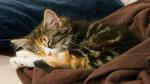 Artemis, 10 Wochen alt