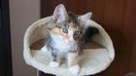 Artemis, 12 Wochen alt