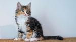 Artemis, 11 Wochen alt