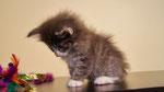 Glinus, 7,5 Wochen alt