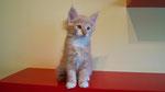 Ginkgo, 11 Wochen alt