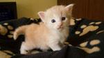 Jack Roger, 3,5 Wochen alt