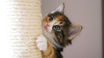 Artemis, 5 Wochen alt