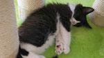 Apollon, 10 Wochen alt