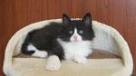 Apollon, 7 Wochen alt