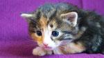 Artemis, 3 Wochen alt