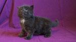 Ares, 4 Wochen alt