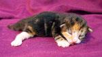 Artemis, 1 Woche alt