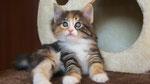 Artemis, 6 Wochen alt