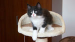 Apollon, 8 Wochen alt