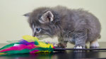 Falco, 5,5 Wochen alt