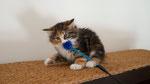Artemis, 9 Wochen alt