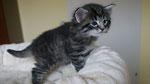 Cayenne, 4 Wochen alt