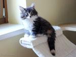 Joy Jumper, 10 Wochen alt