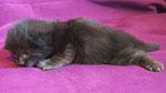 Ares, 2 Wochen alt