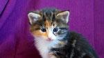 Artemis, 4 Wochen alt